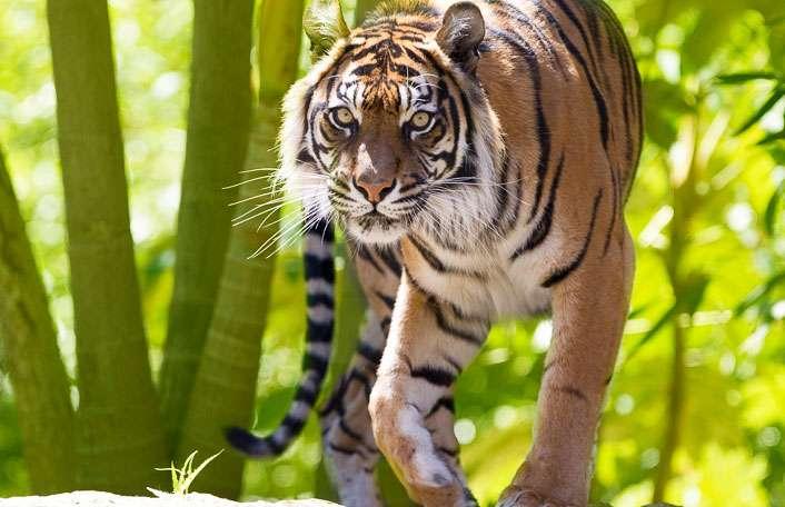 Best School Holiday Activities In Adelaide Zoo